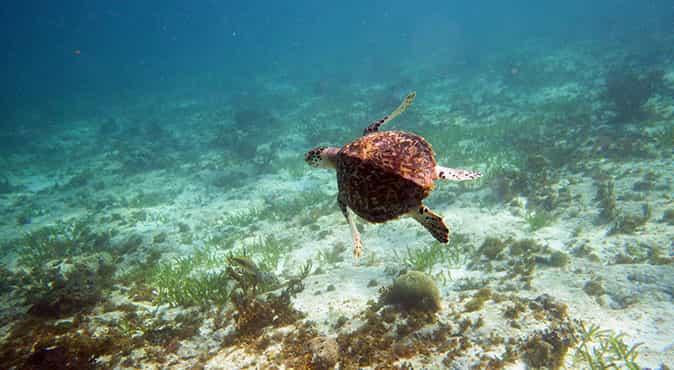 Snorkeling Cancun Musa